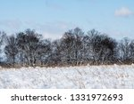 tree during the winter season   Shutterstock . vector #1331972693
