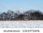 tree during the winter season   Shutterstock . vector #1331972696