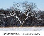 tree during the winter season   Shutterstock . vector #1331972699