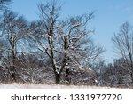 tree during the winter season   Shutterstock . vector #1331972720