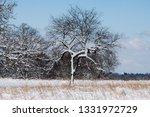 tree during the winter season   Shutterstock . vector #1331972729