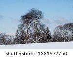 tree during the winter season   Shutterstock . vector #1331972750