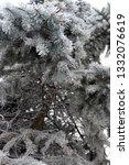 fir branches in hoarfrost. snow ... | Shutterstock . vector #1332076619