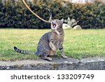 Stock photo playing cat 133209749
