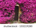 Flowered Door In Porquerolles...