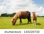 Pony And Young Foal In The...