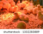 little chickens in the box. ... | Shutterstock . vector #1332283889