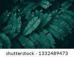 leaf nature background  dark... | Shutterstock . vector #1332489473