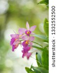 Beautiful Orchid Flower Natural Background - Fine Art prints
