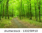 Path In Spring Green Forest