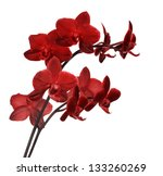 Bright Red Orchid Flowers...