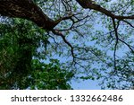 the branches of tree stand... | Shutterstock . vector #1332662486