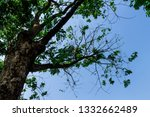 the branches of tree stand... | Shutterstock . vector #1332662489