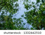 the branches of tree stand... | Shutterstock . vector #1332662510