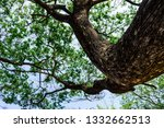 the branches of tree stand... | Shutterstock . vector #1332662513