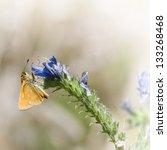 small orange butterfly eats on