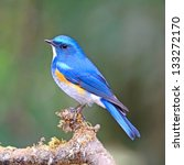 blue bird  male himalayan... | Shutterstock . vector #133272170