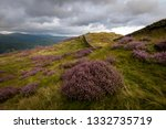 heather blossoming at the top... | Shutterstock . vector #1332735719
