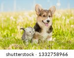 Stock photo pembroke welsh corgi puppy and tabby kitten standing together on a summer grass 1332758966