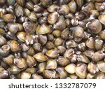 shell soup with garlic  chilli  ... | Shutterstock . vector #1332787079