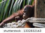 beautiful portrait of ape | Shutterstock . vector #1332832163