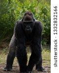beautiful portrait of ape | Shutterstock . vector #1332832166