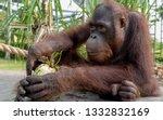beautiful portrait of ape | Shutterstock . vector #1332832169