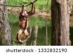 beautiful portrait of ape | Shutterstock . vector #1332832190