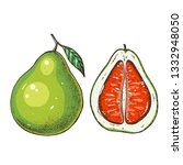 pomelo hand drawn illustration. ... | Shutterstock . vector #1332948050
