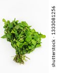 bundle spearmint isolated on... | Shutterstock . vector #1333081256