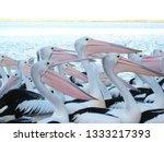 pelican   flock of australian...   Shutterstock . vector #1333217393