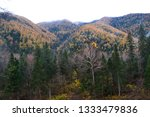 beauty of nature in the... | Shutterstock . vector #1333479836