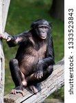 portrait of an ape  | Shutterstock . vector #1333523843