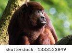 portrait of an ape  | Shutterstock . vector #1333523849
