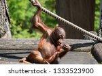 portrait of an ape  | Shutterstock . vector #1333523900