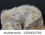 luxurious natural canadian lynx ...   Shutterstock . vector #1333631750
