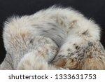 luxurious natural canadian lynx ...   Shutterstock . vector #1333631753