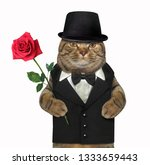 The Sharp Dressed Cat Is...