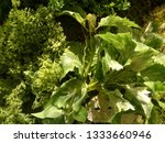 green leaf on the wall ... | Shutterstock . vector #1333660946