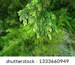 green leaf on the wall ... | Shutterstock . vector #1333660949