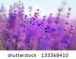 aromatherapy lavender flowers   ... | Shutterstock . vector #133368410