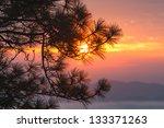 Sunset Through Pine Branches....