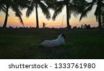 Stock photo the view beautiful sunset sky and twilight and coconut tree silhouette and dog sit on rice field 1333761980