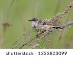 western yellow wagtail ... | Shutterstock . vector #1333823099