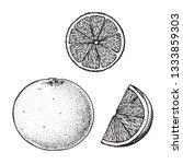 grapefruit hand drawn sketch ...   Shutterstock .eps vector #1333859303