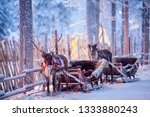 Reindeer With Sledge In Winter...
