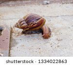Snail On Concrete Floor.
