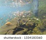 beautiful view at kali biru...   Shutterstock . vector #1334183360