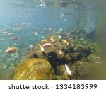 beautiful view at kali biru...   Shutterstock . vector #1334183999