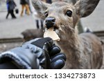 wild deer being feed with... | Shutterstock . vector #1334273873